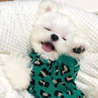 Dog Apparel Pet Sweater Warm Stripe Cotton Clothes Designer For Puppy Small Medium Dogs Sweatshirt Coats Chihuahua Teddy Perro