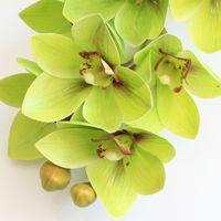 4P Artificial Látex Cymbidium Orchid Flowers 10 cabezas Real Toque de buena calidad Phalaenopsis Orchid para la flor decorativa de la boda 2188 V2