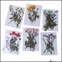 Couronnes Festive Party Fournitures Accueil Jardin 10pcs / Pack Real Fleur pressée Feuilles de fleurs séchées décoratives pour diy cas de téléphone bijoux en résine
