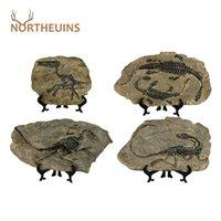 Northauins Resin Dinosaur Figurine Retro Statua animale Statua in miniatura Interni Soggiorno Decorazione Decor Souvenirs per home Regali 210910