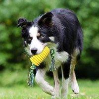 Köpek Oyuncak Mısır Taşlama Çubuk Diş Fırçası Pet Gıda Düşürme Topu Isırık Dayanıklı Çubuk Soyunma Molar Kemik Köpek Çiğneme Yavru Diş Çıkarma Hediye