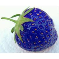100PCS natürliche süße blaue Erdbeersamen-nahrhafter köstlicher Pflanzensamen geben Verschiffen frei