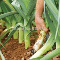 تعقيم بذور الخضروات ، والثوم ، وبذور الكراث ، حوالي 40 الجسيمات