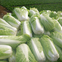 New Hot Delicious 100pcs Chinese Cabbage Seeds Organic Heirl...