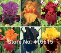 Iris Seeds Bold Colors Bearded Iris Collection Seeds Colorfu...