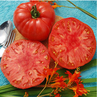 "Super erschwinglich! 100 SEEDS - ""GIANT SYRIAN"" Tomatensamen Fruchtgemüsesamen"