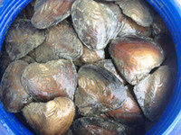 Natural Freshwater Big Monster Oysters Bulk 10pcs Vacuum Pac...