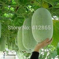 Mix Minimum $5 20pcs lot hot selling Chinese Green Vegetable...