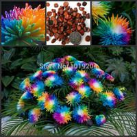 Высококачественные семена бонсай, красочные семена гималайской орхидеи, 50 горшечных орхидеи Красивый двор