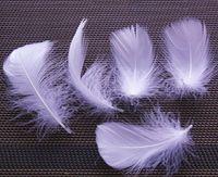 Custom Color White Goose Feathers Goose Down för Smycken Apparel Decor DIY Feather 500PCS 5-10cm