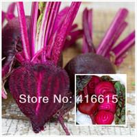 1000 قطعة من بذور بنجر الدم بول ، بذور بنجر بوربل ، الخضروات الحلوة واللذيذة جدا + هدية