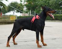 2017 Naylon Ağır Köpek Pet Koşum Yaka K9 Yastıklı Ekstra Büyük Büyük Orta Küçük Köpek Koşumları Yelek Husky Köpekler Malzemeleri