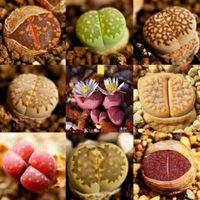 FD2289 nouveau 100 graines de Lithops Rare Mixed Living Stones Succulent Cactus ~ 100 graines ~