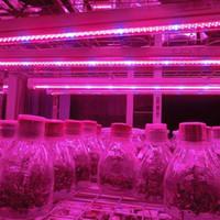 Livraison en gros-gratuit 5m 5050 LED élèvent la lumière bande Growlight 12V rouge bleu imperméable à l'eau pour serre lampe de culture hydroponique