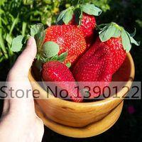 300 / sac Graines de fraises géantes, Rare, Grand comme pêche, Fragaria ananassa L. Maximus Graines de fruits fraises pour jardin