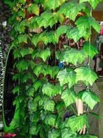 2,4 m di lunghezza grandi viti di foglie della vite fiore di seta artificiale della vite Rattan giardino della casa Decor decorazioni di nozze di compleanno per feste