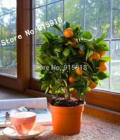 Graines de fruits comestibles Mandarin Citrus Orange Bonsaï Graines de la décoration de jardin Plante 30pcs D06