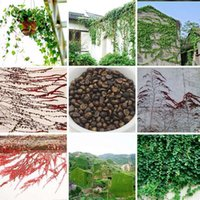 Bestseller Ivy Climbing Perenne Piante Semi Giardino Novel Plants (Rosso Verde) Boston Ivy Seeds 100 Pieces