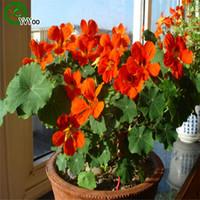 10pcs 매달려 꽃 씨앗 tropaeolum majus 수생 식물 연간 꽃 씨앗 홈 정원 식물 l057