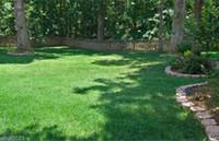 BONSAI PLANT FESTESCUE Mélange de semences d'herbe, Combat extrême, pour la décoration de jardin de la zone sud de la zone Sud 50pcs w12
