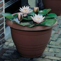 Lotus Sementes Lírios de Água Branco / Recursos de água / Ponds Plants Garden Decoration Plant 10pcs A005