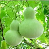10 adet / grup Tohumlar Şişe Kabak Sebze Tohumları Bonsai Bitki DIY Ev Bahçe