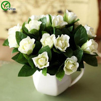 Duftende Blume Jasminsamen Bonsai-Blumensamen Topfpflanzen Blumen 30 Partikel / Tasche W018