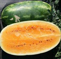 Semillas de sandía anaranjada - Heirloom Citrullus Lanatus Garden Decoration Plant 20pcs F79