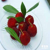 10 teile / beutel red bayberry Samen Hohe überlebensrate bonsai Obst Samen Für Zuhause Gatden balkon Bonsai A067