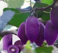 키위 과일 나무 분재 나무 씨앗 매우 아름다운 실내 나무 홈 정원 식물 30 입자 / 가방