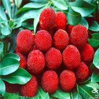 붉은 베이 베리 과일 씨앗, 나무 씨앗, 10 입자 / 가방 과일 분재 나무 A066