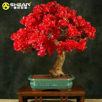 100 PCS   bag Red Bougainvillea Spectabilis Seeds Perennial ...