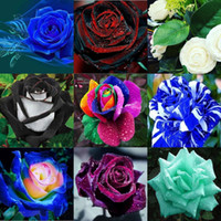 Wholesale Varieties 10 Colors Rose Flower Seeds 100 Seeds Pe...