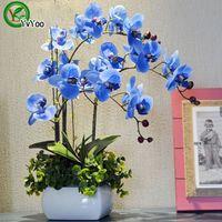 30 частиц / лота моли семена орхидеи семена цветов бонсай в горшечные растения для домашнего сада U013