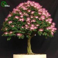 Kaufen Sie Im Grosshandel Indoor Bonsai Baum Samen 2018 Zum Verkauf