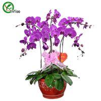 Больше цветных семян орхидеи Орхидеи Цветочные семена крытый бонсай 30 частиц / Лот U010