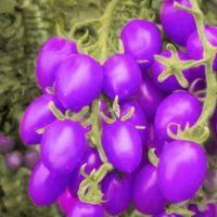 Bonsaï graines végétales fruits légumes graines tomates petites tomates graines décoration de jardin arbre de décoration de jardin 40pcs