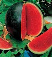설탕 아기 수 박 citrullus lanatus 과일 씨앗 정원 장식 공장 20pcs A006