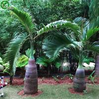 Butia Capitata Seeds Bonsai Tree 100% Истинные семена в добрые стрельба Домашний садовый завод 5 шт. N014