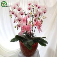 Красивые семена орхидеи о орхидеи Красивый цветочный завод Домашний сад Цветочный завод 30 шт. U012