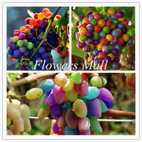 Bonsai-Frucht-Regenbogen-Trauben-bunte süße Rebe-Fruchtpflanze Samen Garten Dekoration Anlage 20 stücke A74