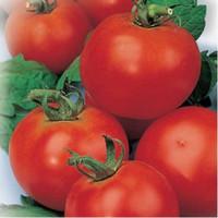Bonsaï Plante Graines Red Tomate Yefemer - Ephemera Bio Bio Russian Végétal Heirloom Seed Jardin Décoration Plante 30pcs E16