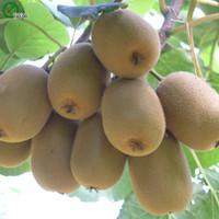 키위 씨앗 맛있는 과일 미니 화분에 심은 과일 나무 씨앗 흥미로운 분재 공장 50 입자 / 로트 W014