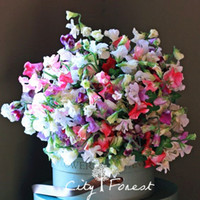 Sweet Pea Fragrant Flower Mix Color 50 Seeds   Bag Easy to G...