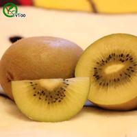100 입자 / 가방 노란색 키위 씨앗 맛있는 과일 미니 화분과 과일 나무 씨앗 흥미로운 분재 공장 T002