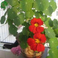 Tropaeolum Majus 씨앗 분재 꽃 씨앗 화분에 심은 식물 꽃 10 입자 / 가방 P002