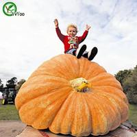 새로운 식물 거대한 호박 씨앗 정원 식물 유기 야채 씨앗을 쉽게 성장하기 쉬운 10pcs R013