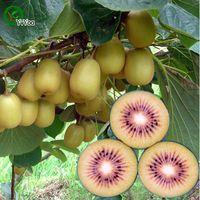 키위 씨앗 녹색 유기농 야채와 과일 씨앗 맛있는 100 입자 / lot T004