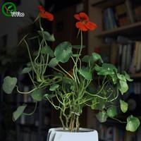 Tropaeolum majus 씨앗 프로모션 발코니 분재 꽃 씨앗 꽃 식물 10 개 P004