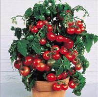 2016 Precipitò nuove piante da esterno Promozione giardino pomodoro seme in vaso bonsai balcone frutta verdure semi 100 pz